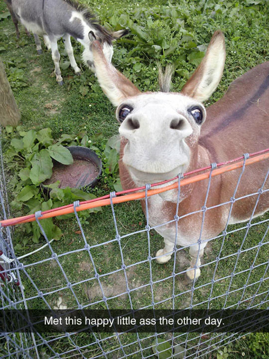 cool-donkey-happy-smiling-watching