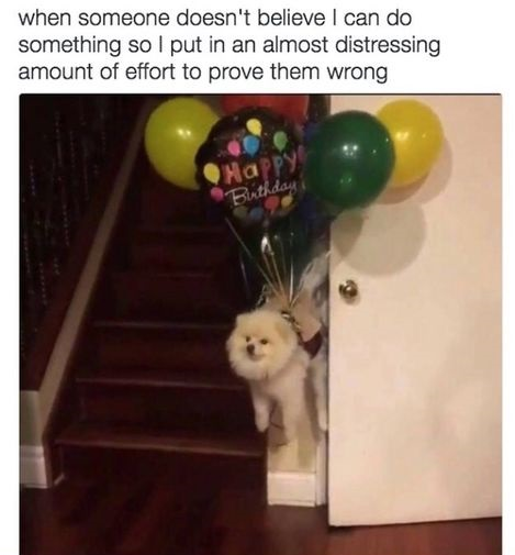 dog-balloons-motivation