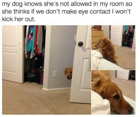 dog-eye-contact-room