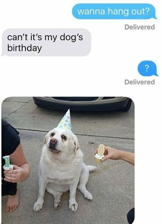 dog-muffin-bday-zero