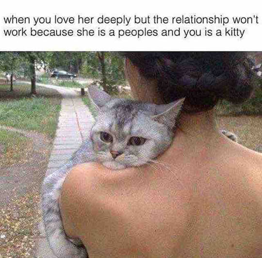 funny-cat-in-love-woman