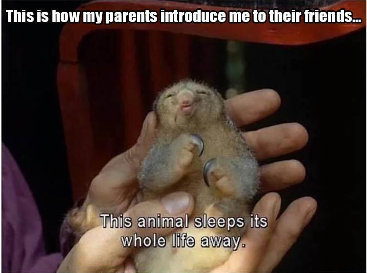 parents-sleep-animals-friends