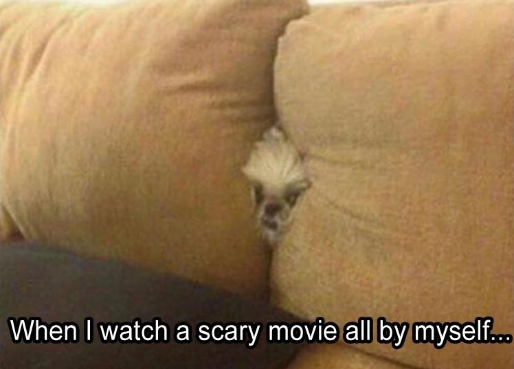 scary-movie-couch-dog