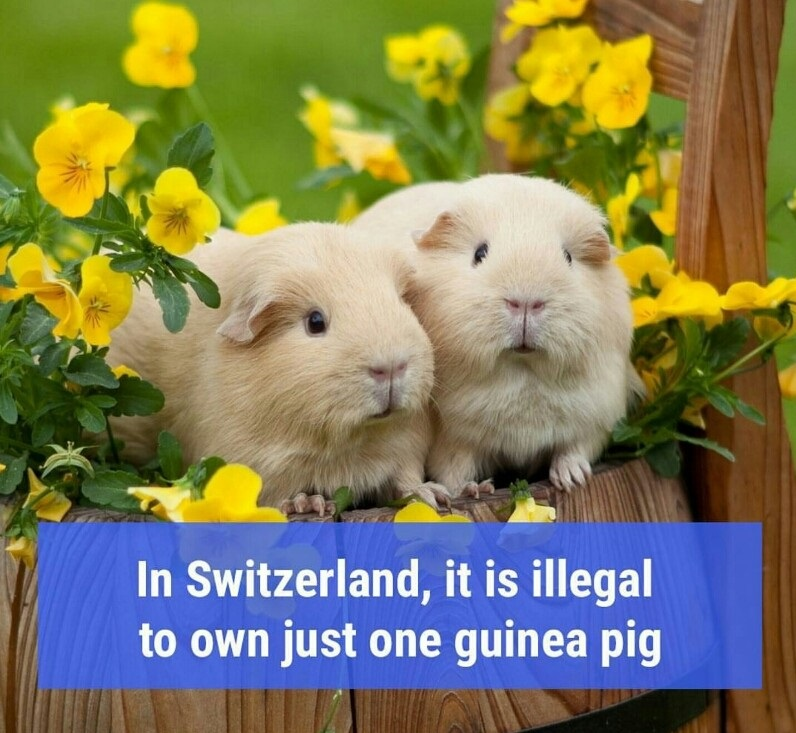 Switzerland has got its priorities right