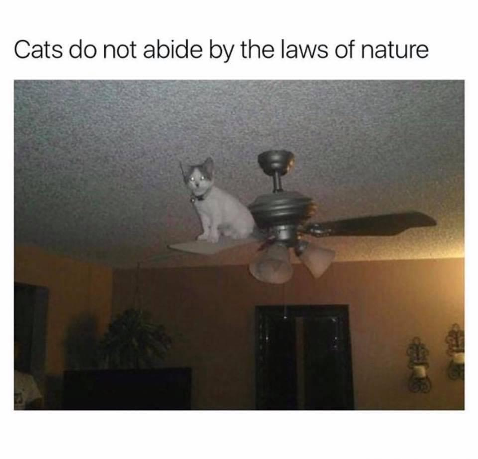 Cats vs. nature