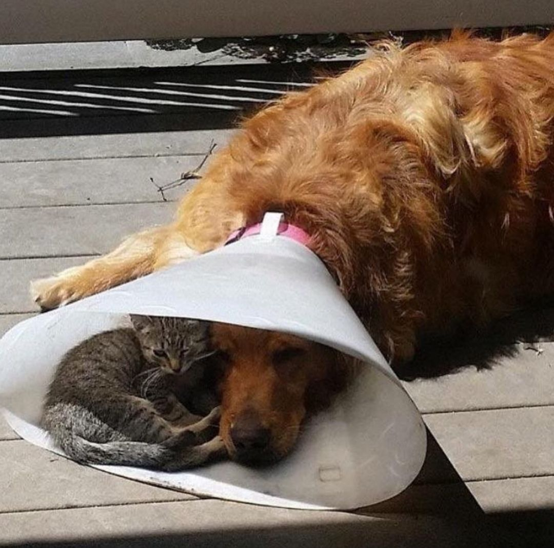 Dog vs kitten. Isn't it so cute, adorable and kindness?