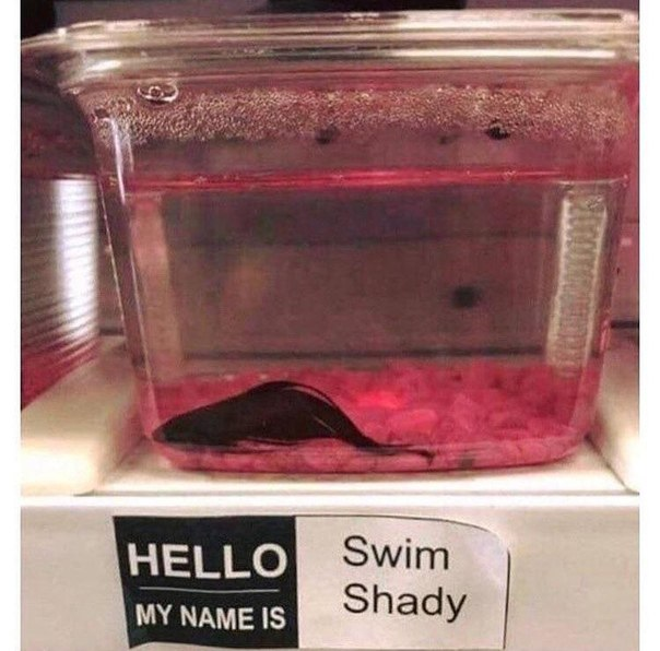 The Real Swim Shady
