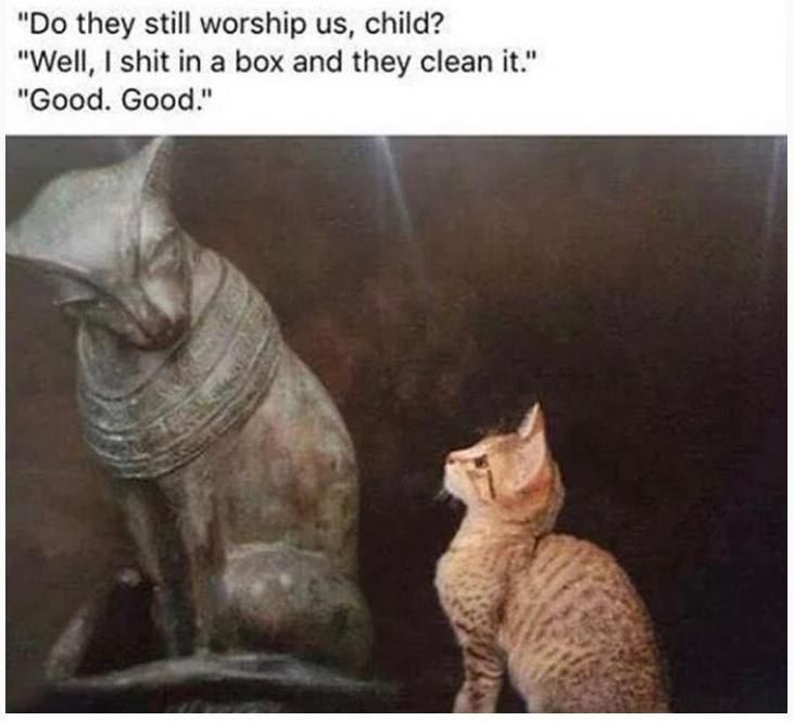 This is not news that cats are deity, and man is just a servant